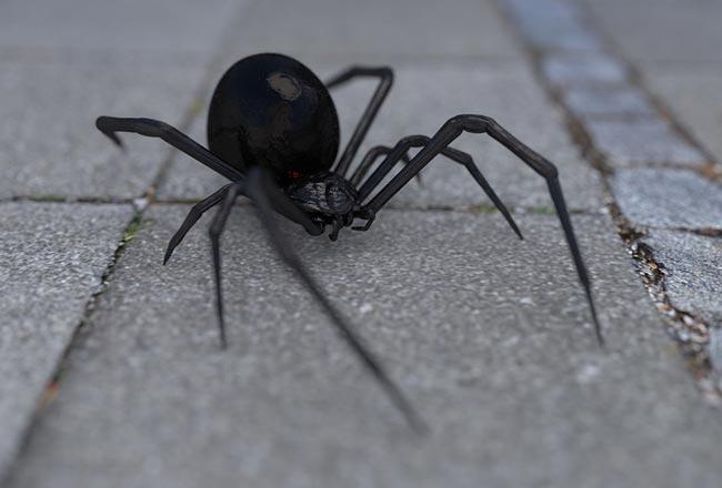сонник к чему снится паук на постели